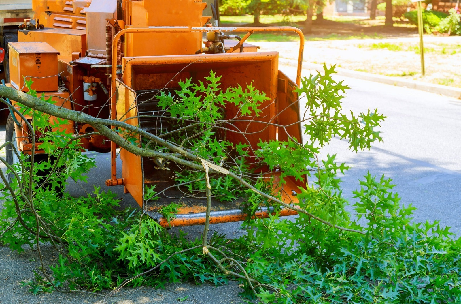 Service Arborist