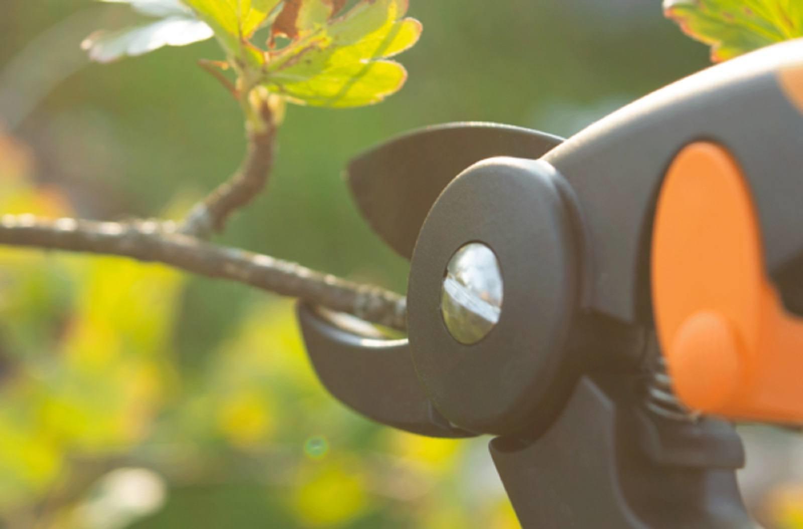 Service Tree Pruning