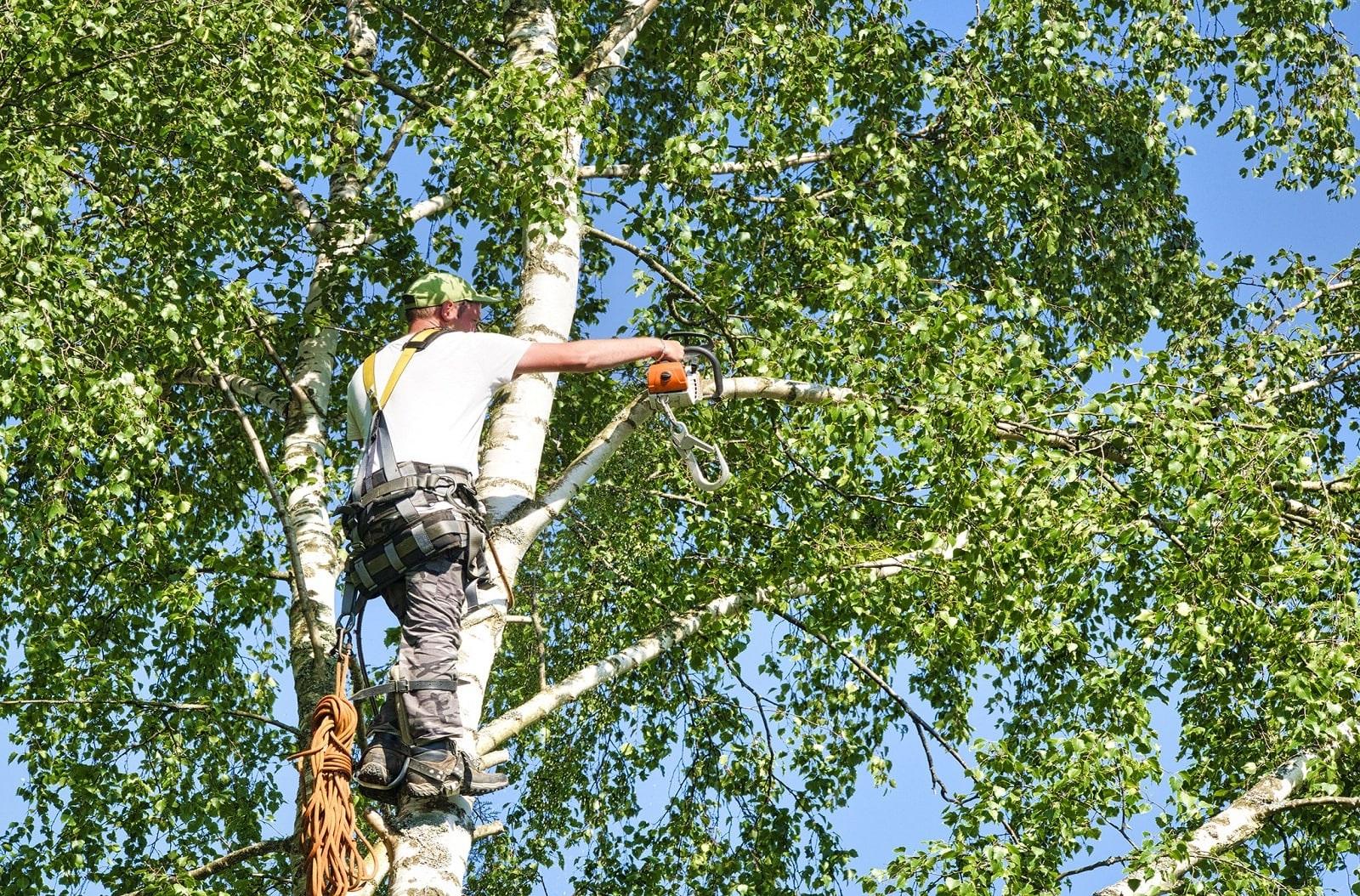 Service Tree Trimming