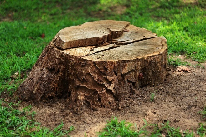 stump removal ballarat1
